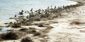 Birds in Fort De Soto Park